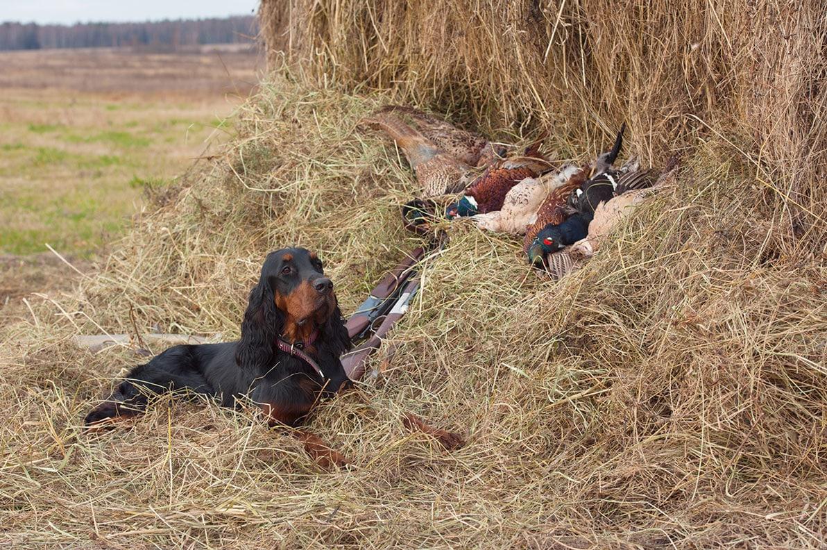 Successful Bird Shoot
